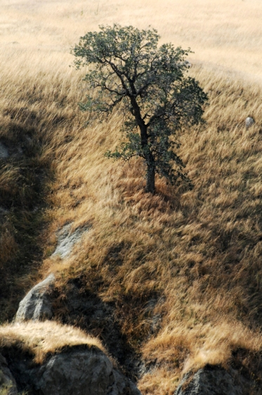 Michael Fuchs Landscapes Portfolio (19)