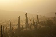 Michael Fuchs Landscapes Portfolio (9)