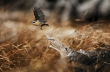 Michael Fuchs Wildlife Portfolio (15)