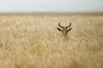 Michael Fuchs Wildlife Portfolio (3)