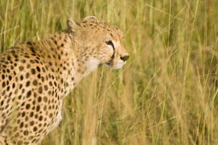 Michael Fuchs Wildlife Portfolio (6)