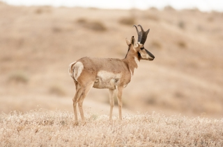 Michael Fuchs Wildlife Portfolio (8)